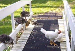 Birds on Deck