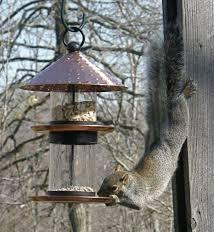 squirrell sretch feeder